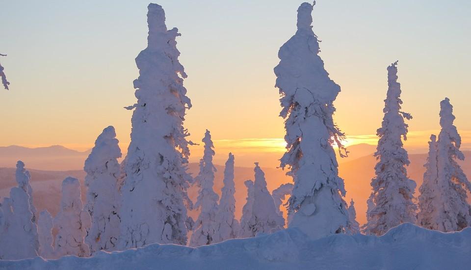 bevroren-bomen