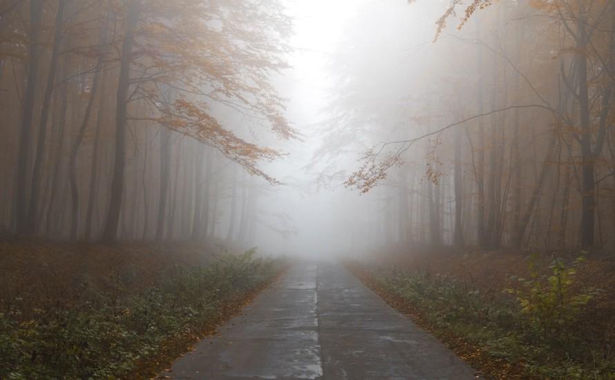 mist-herfstbomen